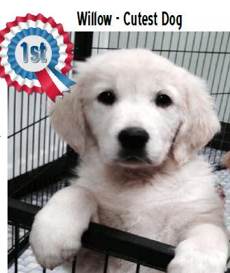 Aldridge Rotary Club Dog Show